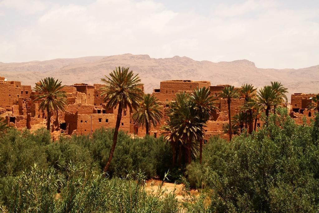 berber adobe village and palmgrove