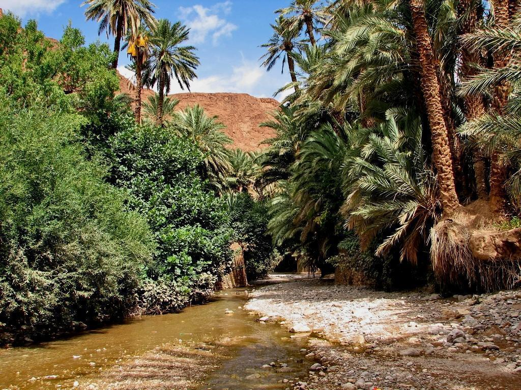 palmgrove south of morocco