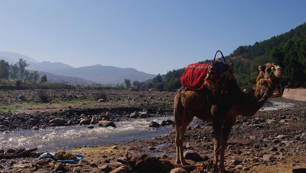 camel ride in atlas mountains