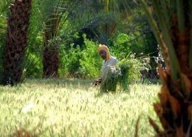 work in the fields, palm grove