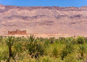 palm grove and kasbah